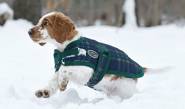 THE TUNDRA (BLS1590) Our best seller! Extremely durable and made to withstand tough climates with its water resistant exterior and fleece lined interior. The Tundra coat is ideal for wet and snowy weather and is available in 8 fun colours for your pet.