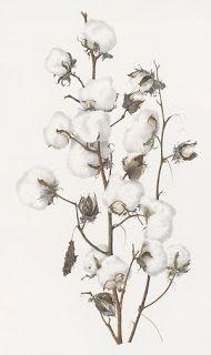Cotton / Botanical Print