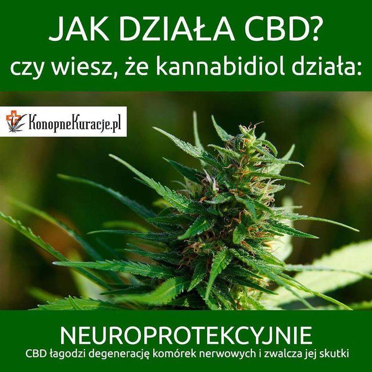 Jak działa CBD? czy wiesz, że kannabidiol działa: Neuroprotekcyjnie CBD łagodzi degeneracje komórek nerwowych i zwalcza jej skutki #cbd #olejkicbd #olejekcbd #olejcbd #konopnekuracje #konsultacje #zdrowie #warszawa #polska