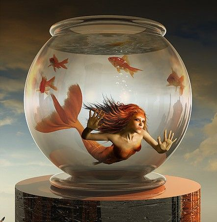 living in a fishbowl...