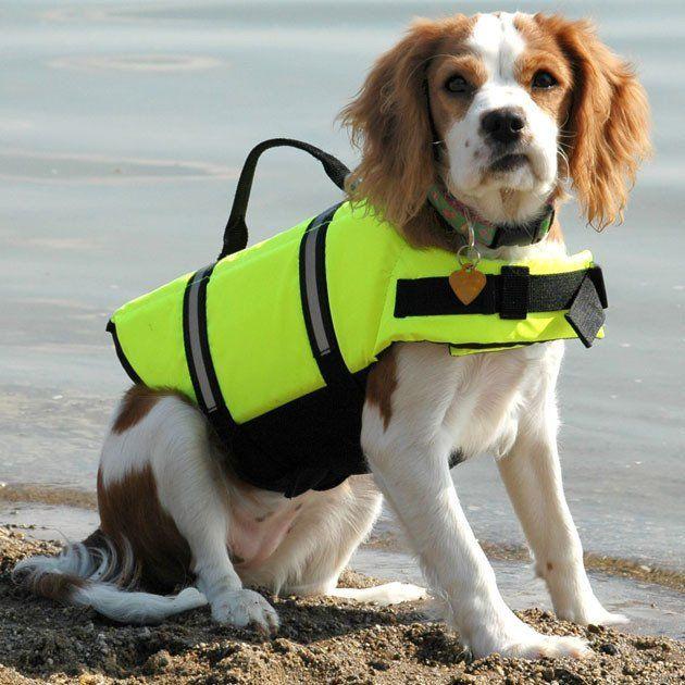 Flotation Device Dog Life Vest Jacket #Safety