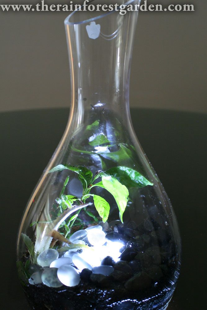 how to make a plant light
