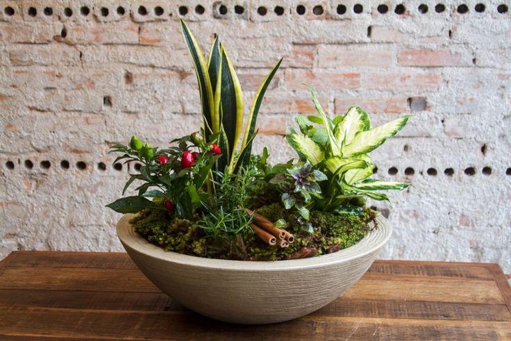 Monte o vaso das sete ervas e atraia bons fluidos para a casa - Casa e Decoração - UOL Mulher