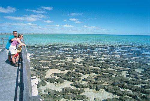 Stromatolites and boardwalk at Hamelin Pool
