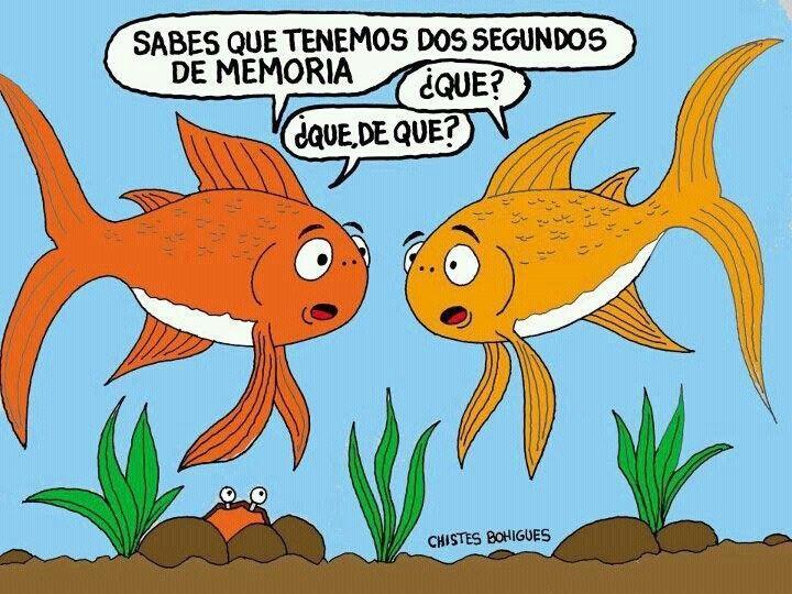 Yo tb tengo un poco de memoria de pez