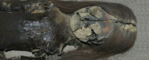 A collection of mummified human remains found in northern Chile has been turning into black slime due to rising humidity levels, and Chilean researchers are at a loss for how to stop it.