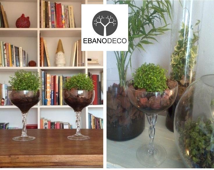 Copas de musgo en casa de clienta/ Copa de musgo en Ebanodeco