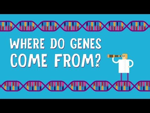 A TED-Ed Animation Explaining Where Genes and Gene Mutations Come From