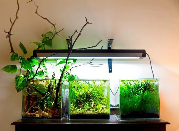 174 besten aquascaping wabi kusa bilder auf pinterest planted aquarium aquarien und. Black Bedroom Furniture Sets. Home Design Ideas