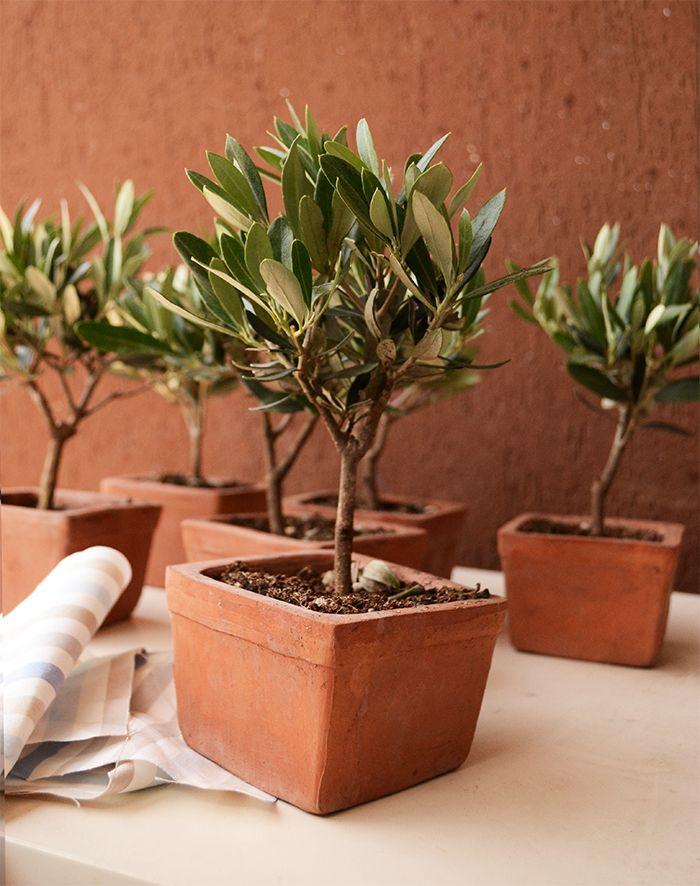 Favorito Oltre 25 fantastiche idee su Bomboniere pianta su Pinterest  PE49
