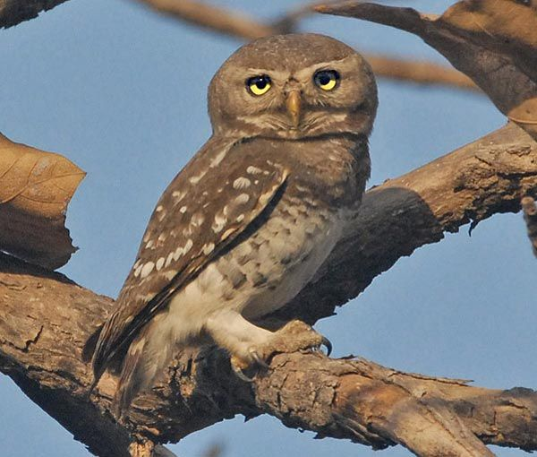 The 5 Bird Species in Maharashtra on The Verge of Extinction