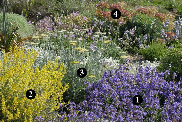 1 : Salvia lavandulifolia subsp. blancoana 2 : Anthyllis cytisoides 3 : Achillea clypeolata 4 : Euphorbia rigida