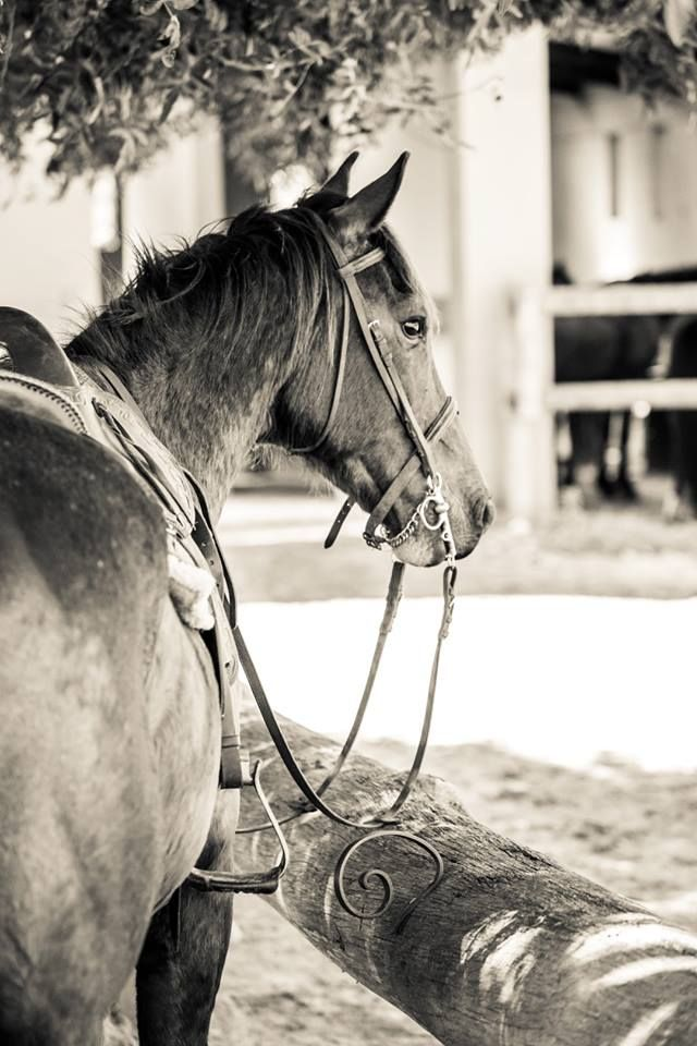 horse back safaris... no experience needed