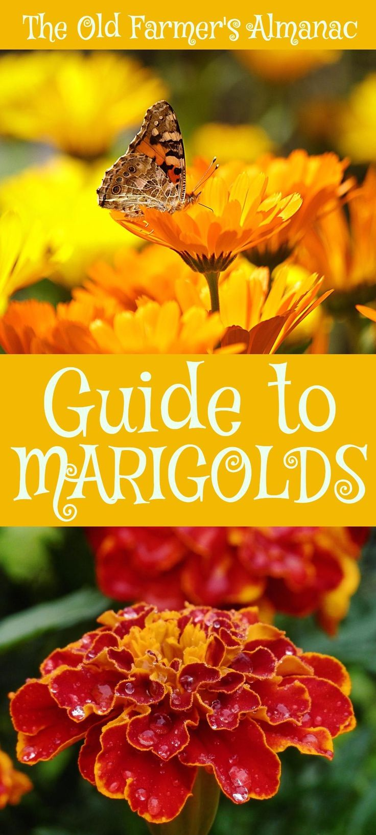 best images about garden planning gardens marigolds
