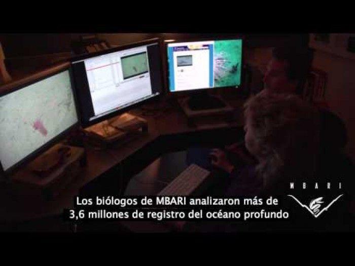 VIDEO// Filmaciones en lo más profundo del océano revelaron algo aterrador