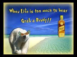 Bundaberg Rum Distilling co. #the #best #rum #world #wide #queensland #Australia #yum #drink #alcohol #polar #bear #rum #bundy #yeast #sugar #cane #distil #water #good #afternoon #drink
