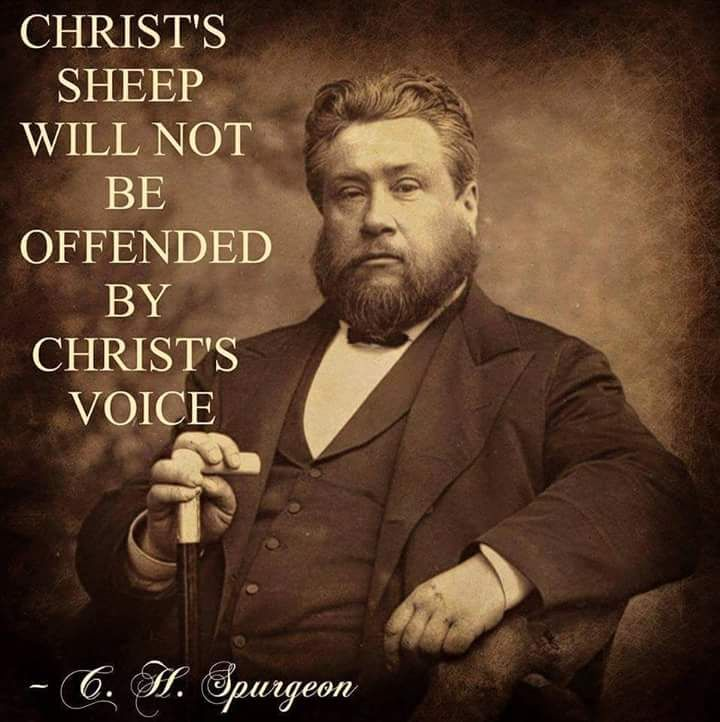 Charles Spurgeon - Christ sheep will not be offended by Christs voice.....John 10:27 My sheep hear my voice, and I know them, and they follow me: