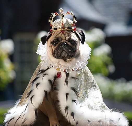 This time Roxy dons her royal clothing