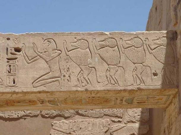 Wall relief of Ramses III and baboons, mortuary temple of Ramses III, Medinet Habu, Theban Necropolis, Egypt.
