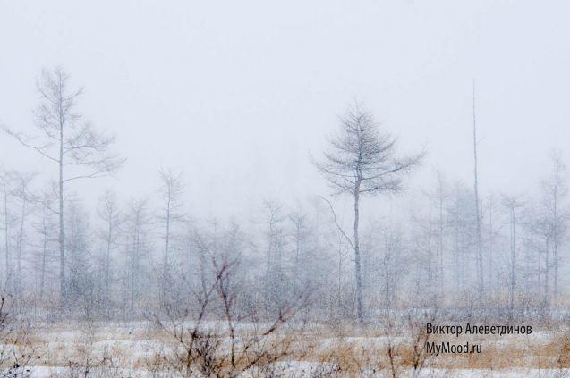 Снежное начало декабаря 2015 года, снег, метель и еще снег, зима наступила