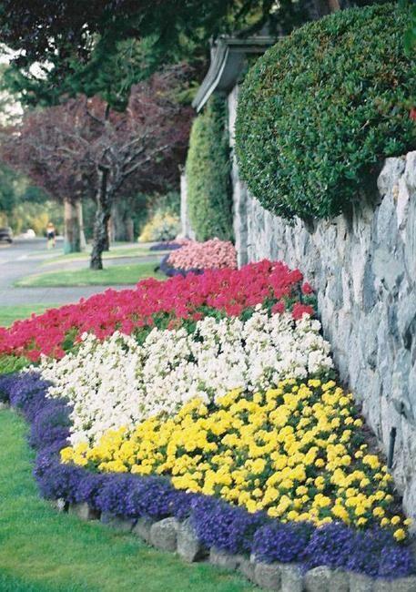 49 Best Tall Border Plants Images On Pinterest Border 400 x 300