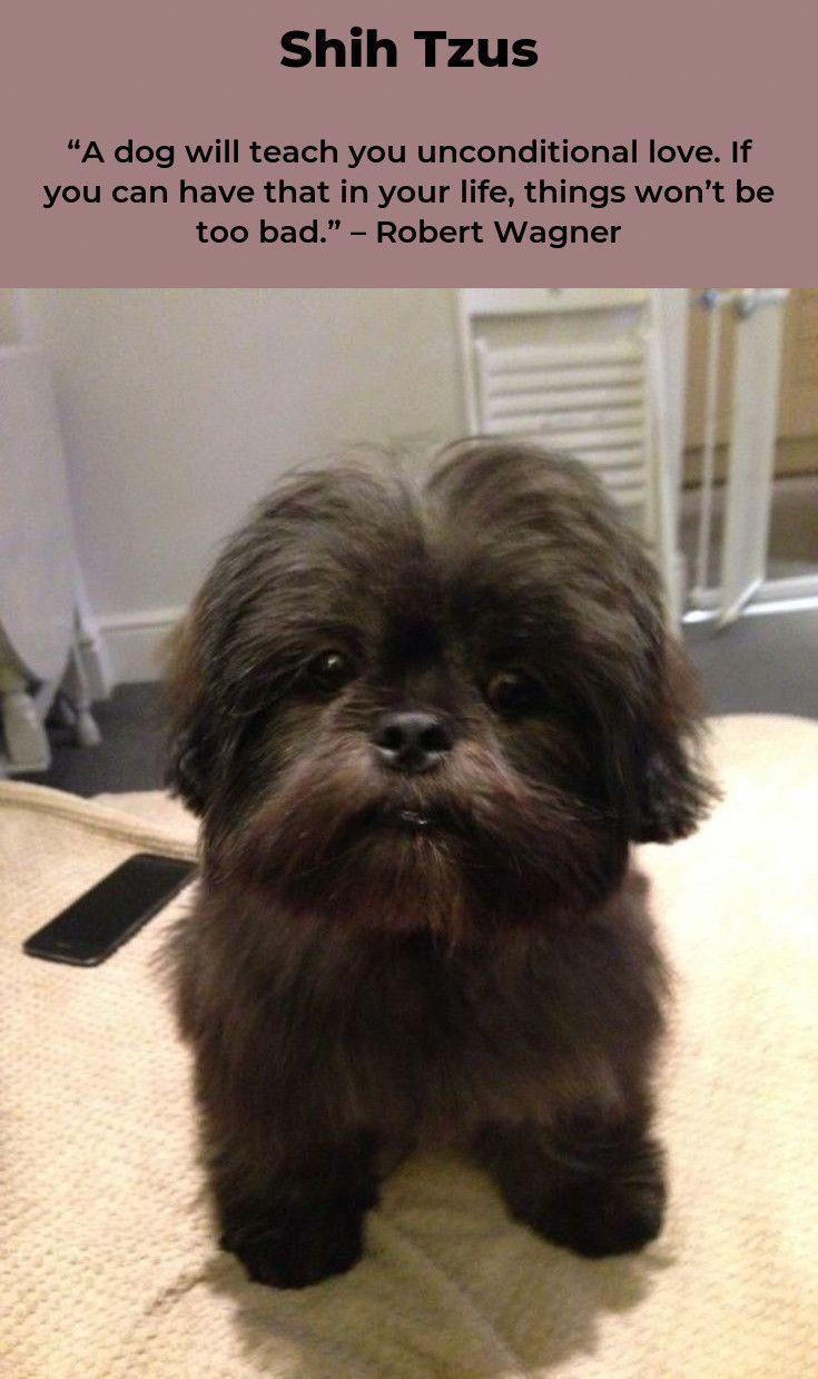 how to groom a shih tzu puppy at home