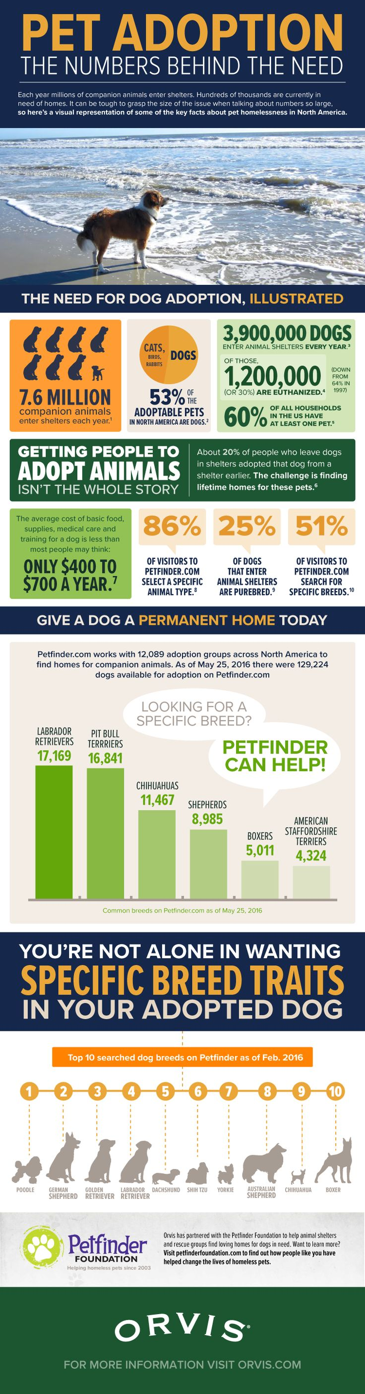 Dog Adoption: The Numbers Behind The Need (Infographic)