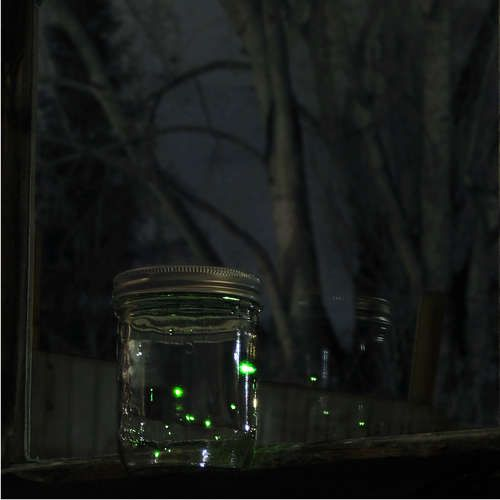 Image result for catching fireflies in a jar photos
