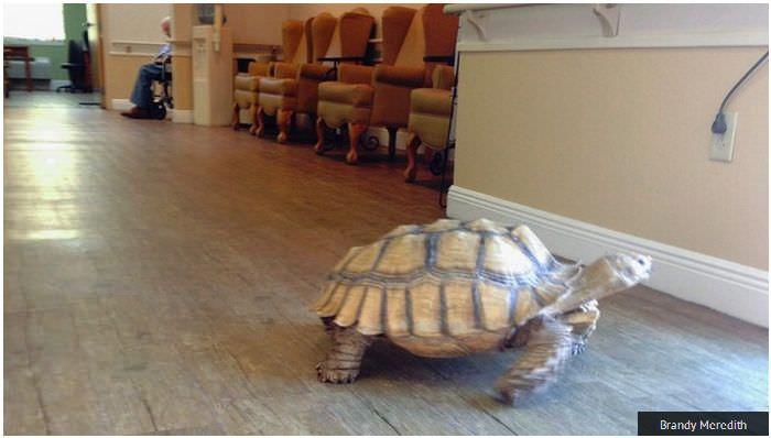 1000 id es sur le th me maison tortue sur pinterest tortues l 39 habitat de la tortue et enclave. Black Bedroom Furniture Sets. Home Design Ideas