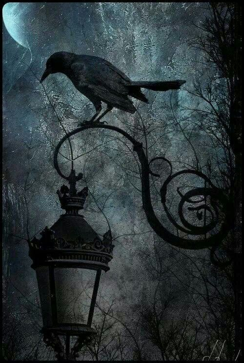 94 Best Nevermore Images On Pinterest