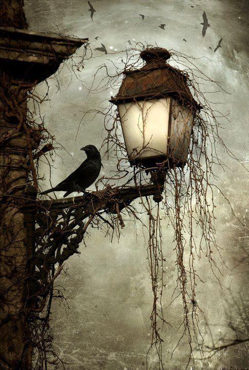 Beautiful darkness.