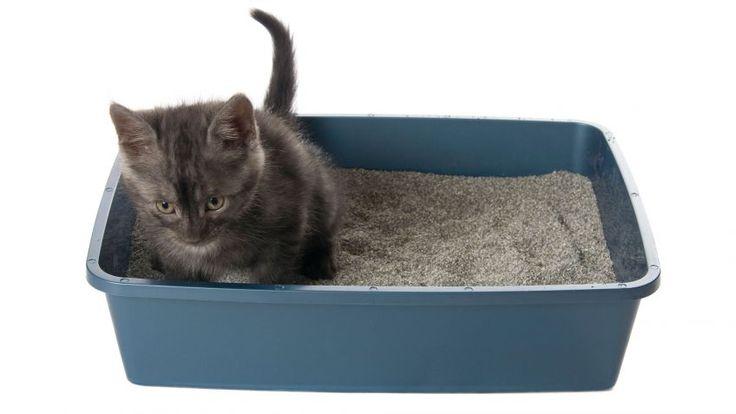 Cómo hacer arena para gatos casera
