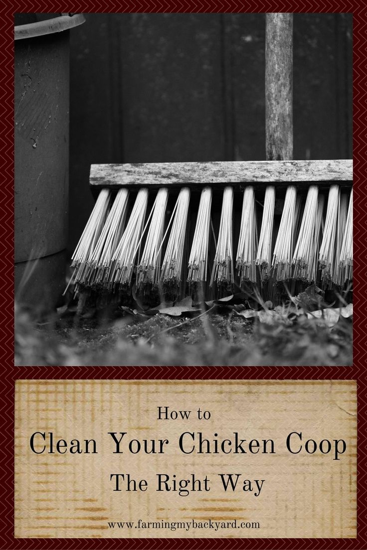 1000 Images About Chicken Coops On Pinterest Chicken Coop