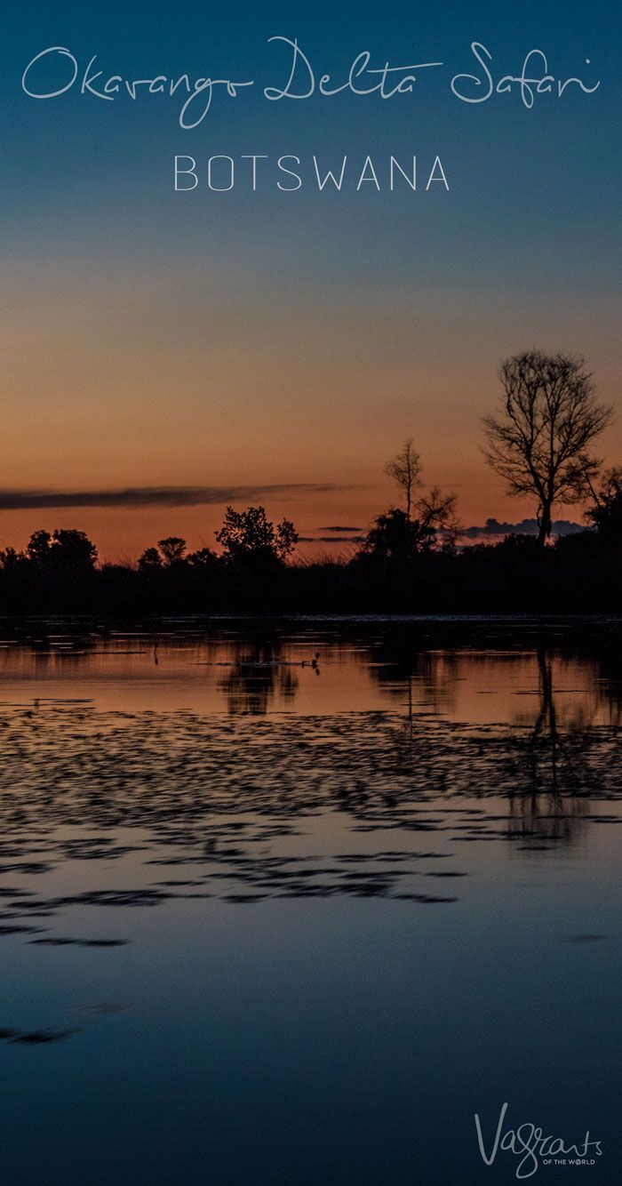 Discover one of Africa's great untouched wildernesses on an Okavango Delta safari in Botswana. #safari #okavango #botswana #africa #adventure