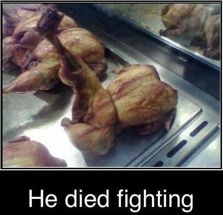 Fighting chicken!