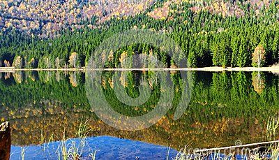 Panoramic view of autumn forests in lake Santa Ana in Roumania with  colorful clear reflection in clear water. Sunny day and blue sky reflect in water. wonderful surroundings.