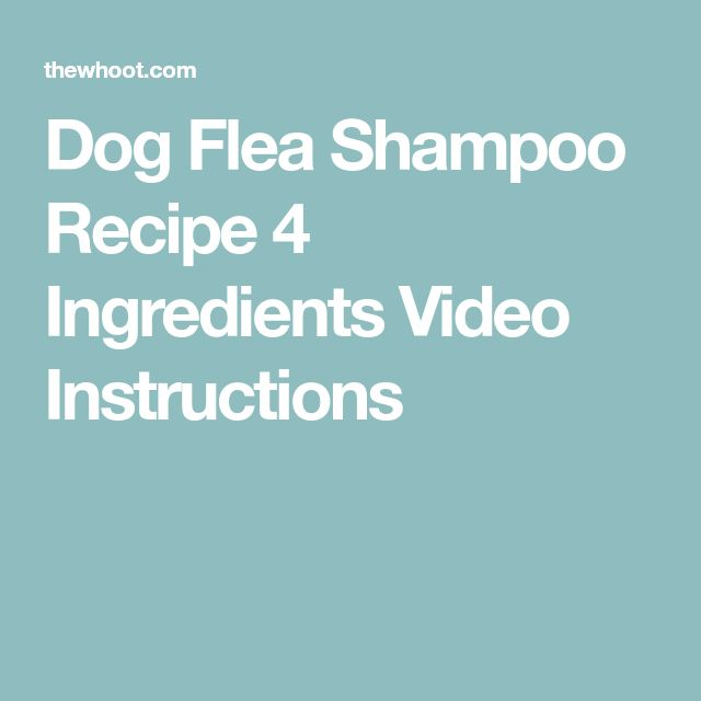 Dog Flea Shampoo Recipe 4 Ingredients Video Instructions
