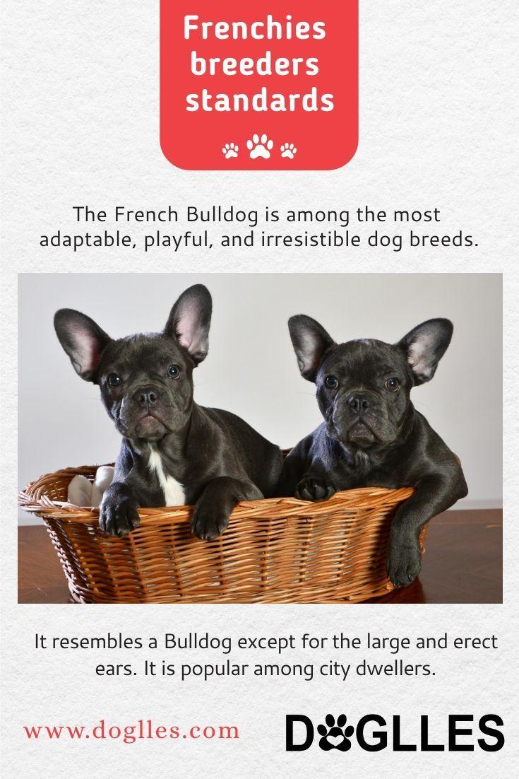 Adorable French Bulldog Puppies French Bulldog Puppies Bulldog