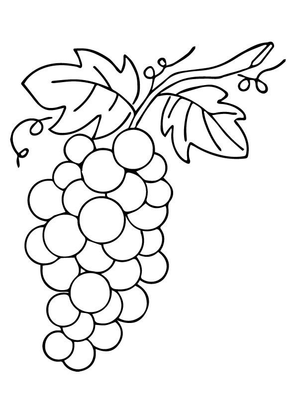 Pin By Ardel Lindow On Embroidery Coloring Pages Grape Drawing Vine Drawing