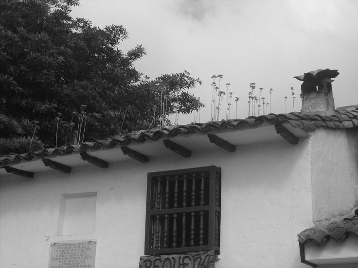 Chorro - Bogota