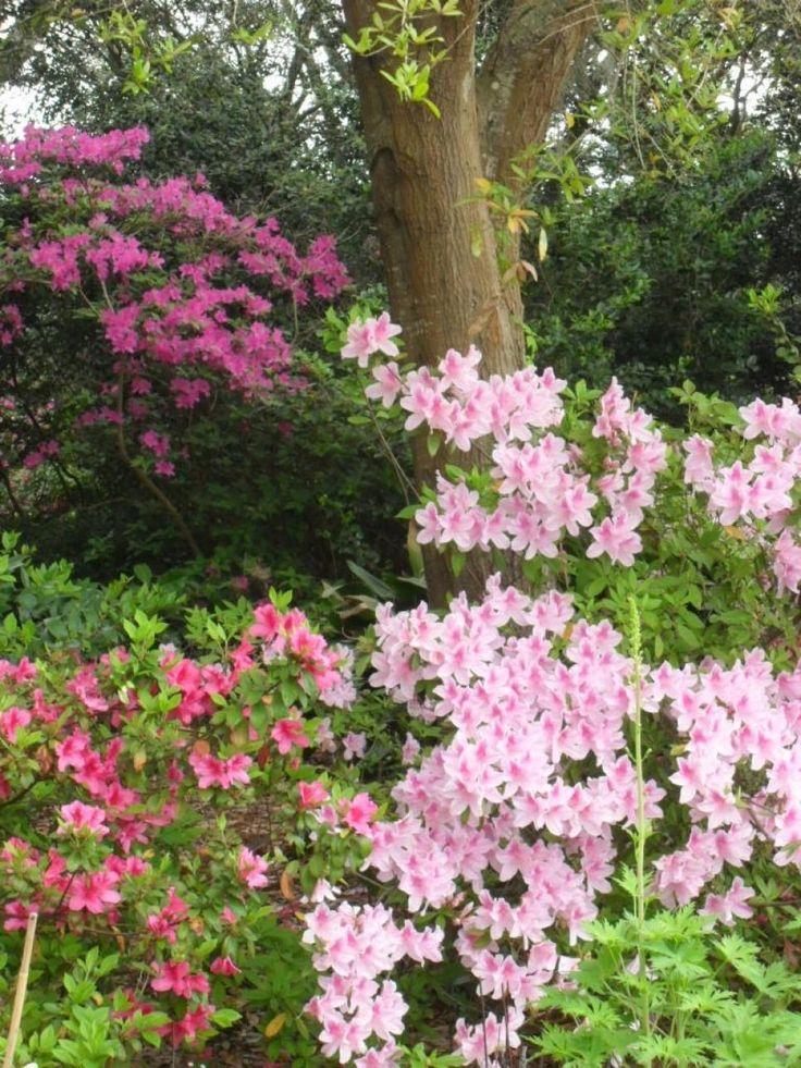 Wisconsin Gardening Enewsletter: 25+ Best Ideas About Shrubs For Shade On Pinterest