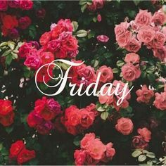 #TGIF Happy Friday! Backdrop for my wedding at the rose bowl #17daytoMrs.: Beautiful, Roses, Posts, Wallpapers, Pink, Flowers, Floral, Photography