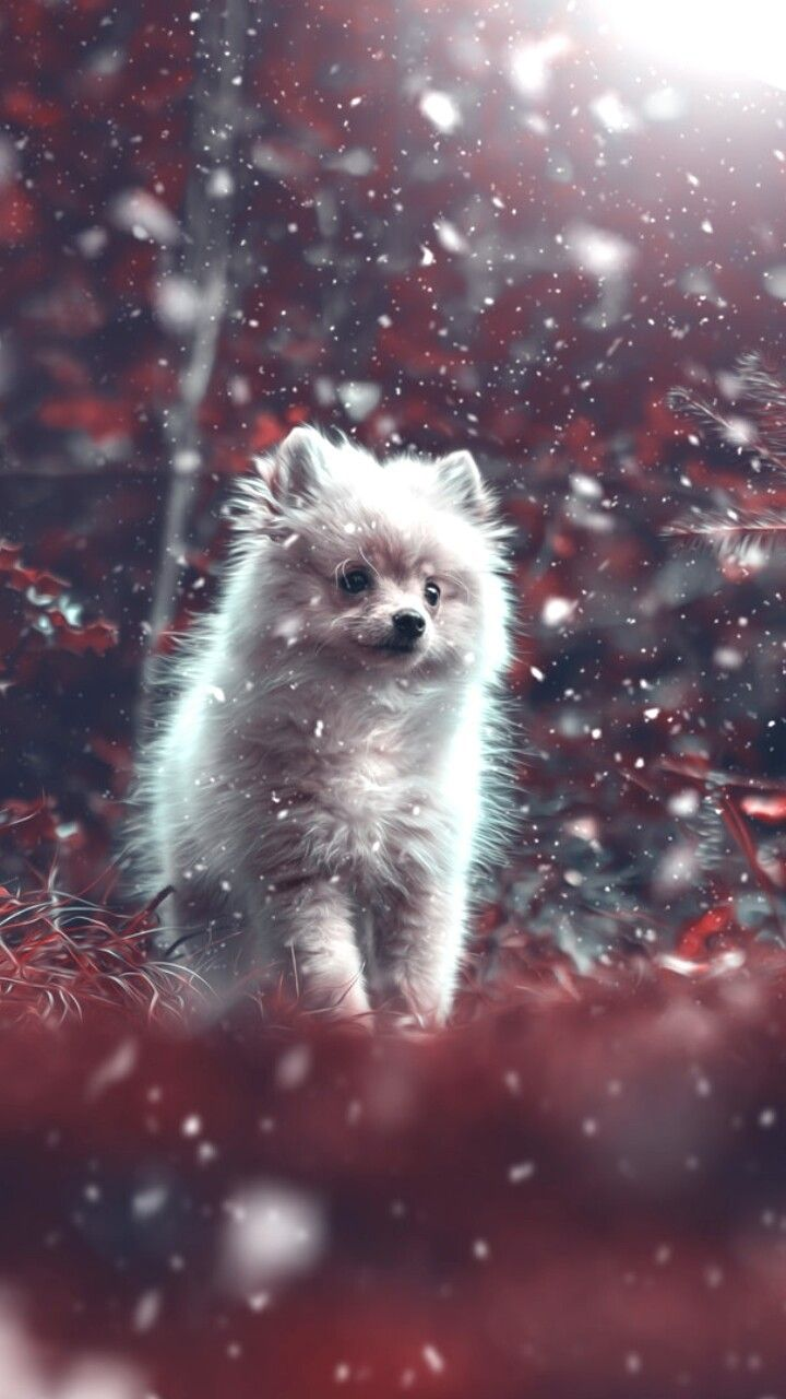 Baby Dog Wallpaper Cute Animals Puppies Baby Dogs Cute Animal Videos