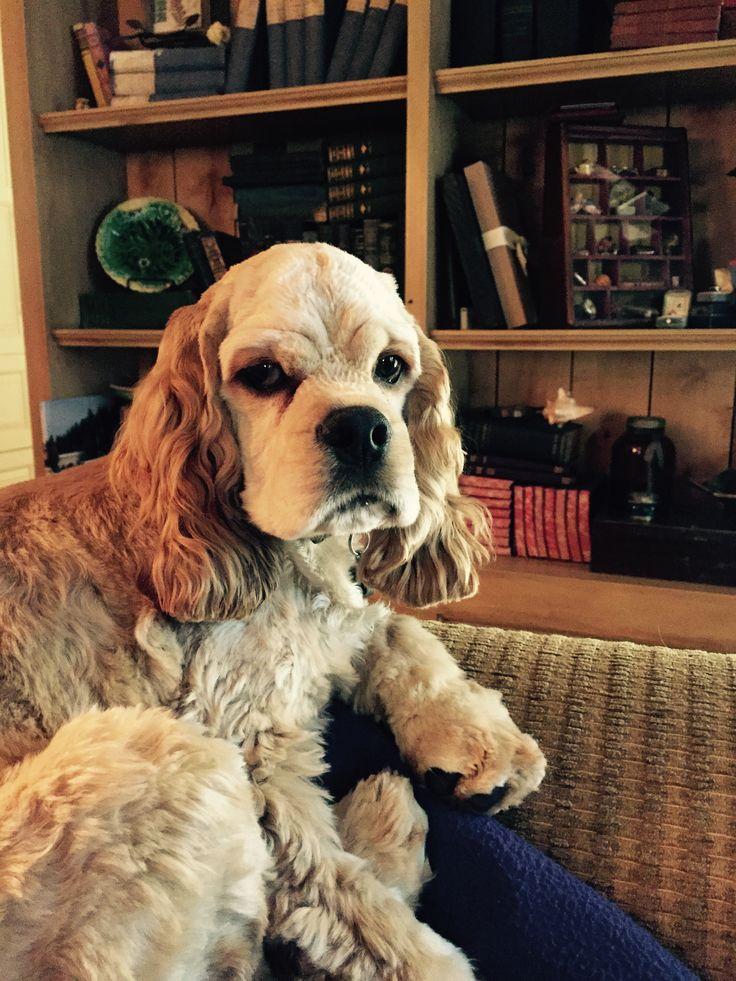My Rupert
