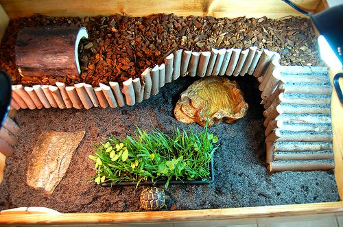 i think Sherlock  would LOVE this!...so we're doing it!  Cute Russian tortoise habitat idea.