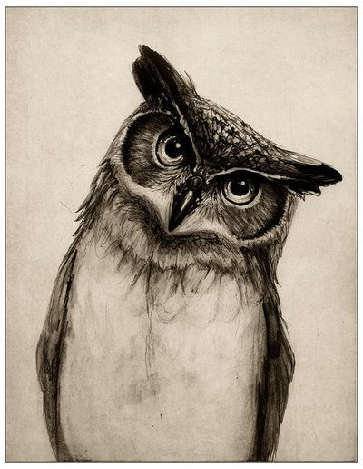 "Free printable vintage style illustration of a handsome owl.  High resolution image ""Think North"".  Great for DIY paper crafts."