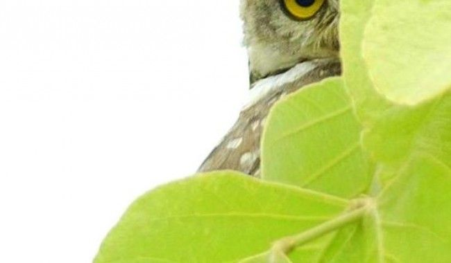 Umred Wildlife & Tiger Photography Expedition >>>#Wildlife #Photography #Nagpur