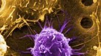 Process of Stem Cell Research | eHow