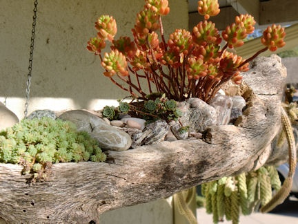 17 Best Images About Eco Driftwood Planters On Pinterest 400 x 300