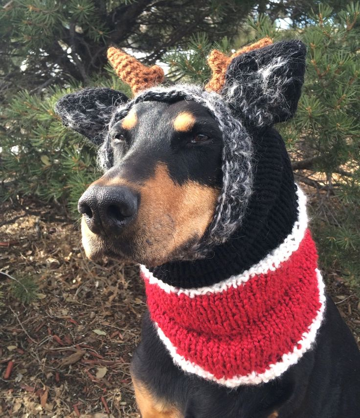 Snood with Ears - Reindeer Snood- Knitted Snood for Large to Extra Large Dog by PixxieKnitts on Etsy